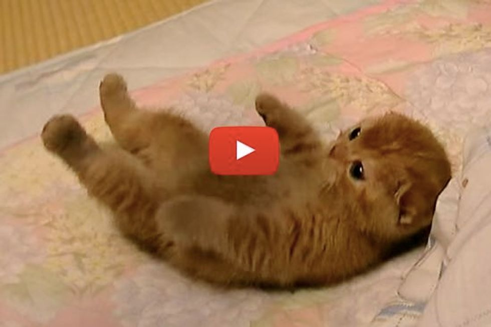 Kitten Rolling Around Trying to Catch His Human's Hand