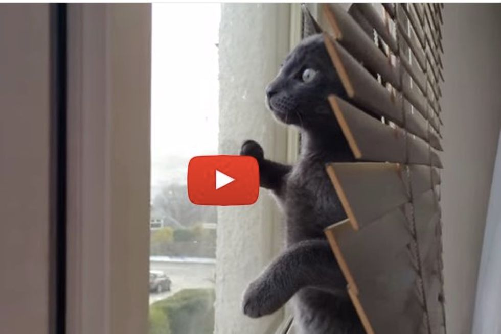 Kitten Seeing Snow for the First Time