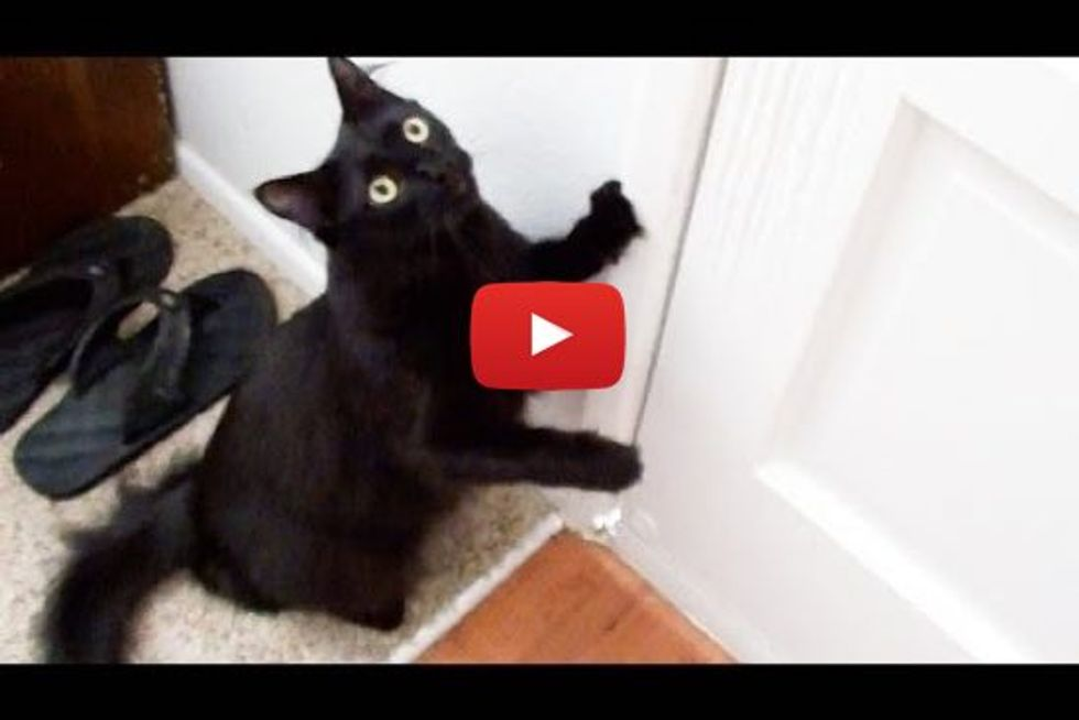 Cat Demands to be Walked like a Dog!