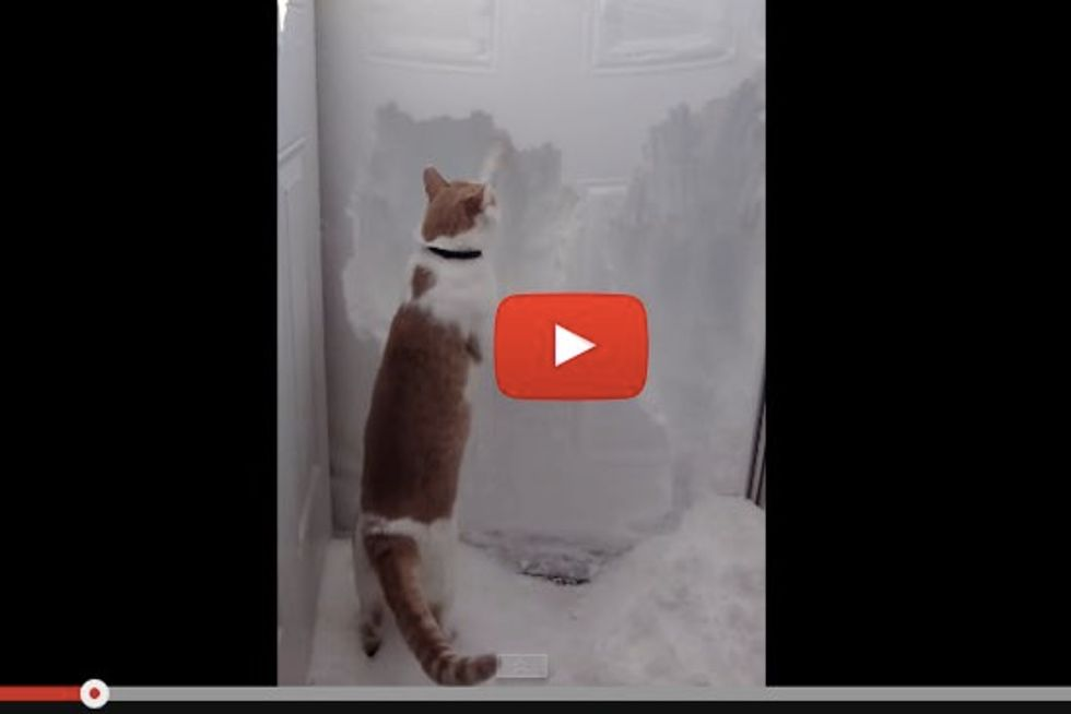 Rudiger the Cat Helps Clear Four Foot Wall of Snow