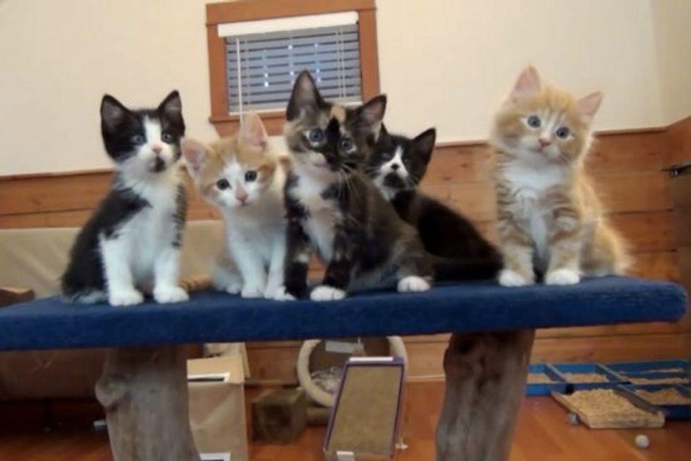 Foster Kitten Dance Party!
