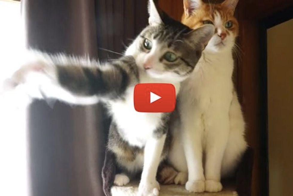 2 Types of Cats: Hyper Cat & Cool Cat