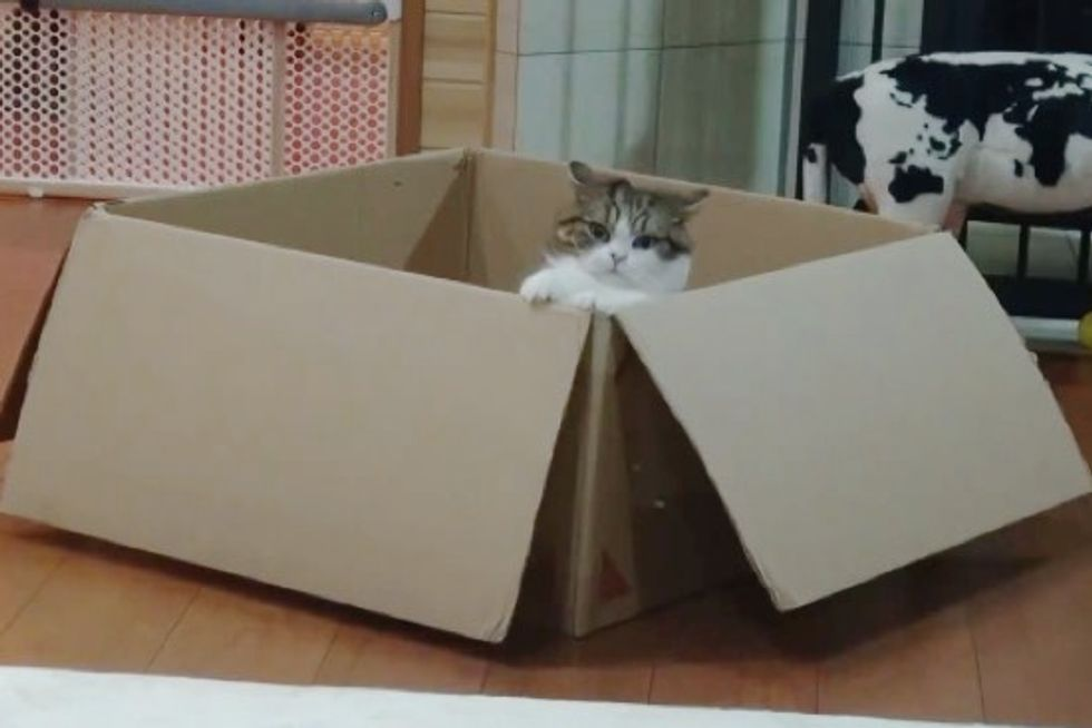 Maru is Determined to Guard His Giant Box from Hana. Gotta Love the Ending!