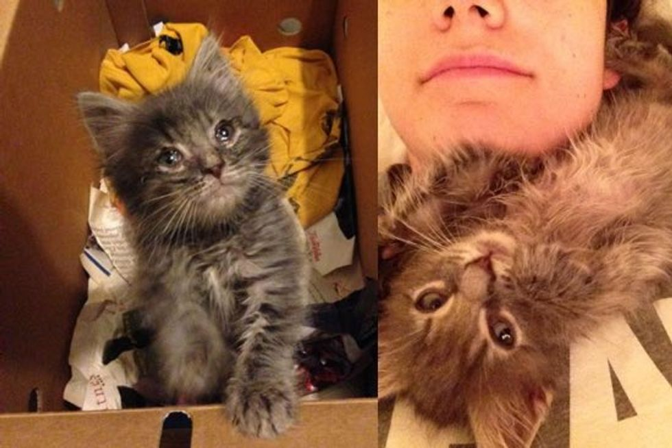 Scruffy Kitten Strays into the Heart of His Rescuer