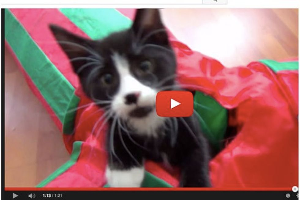 Kittens Go Crazy with Cat Tunnel. One Kitten Even Launches Like A Missile