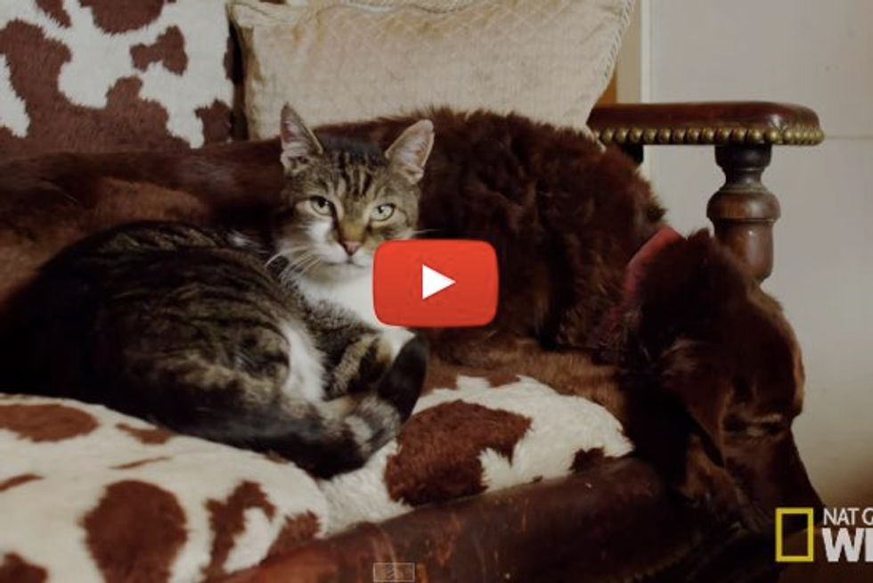 Pudditat the Cat Becomes the Eyes for a Blind Dog. It's An Unbreakable Furry Bond