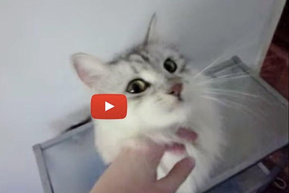 Fluffy Siberian Cat Tells Mom What He Wants