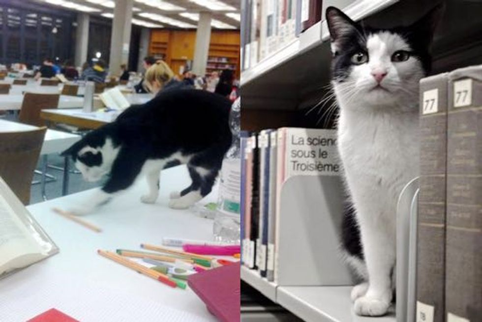 Pep the Cat Makes University of Regensburg His Home