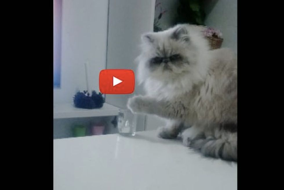 Proof that Cats Do Whatever They Want, Whenever They Feel Like it