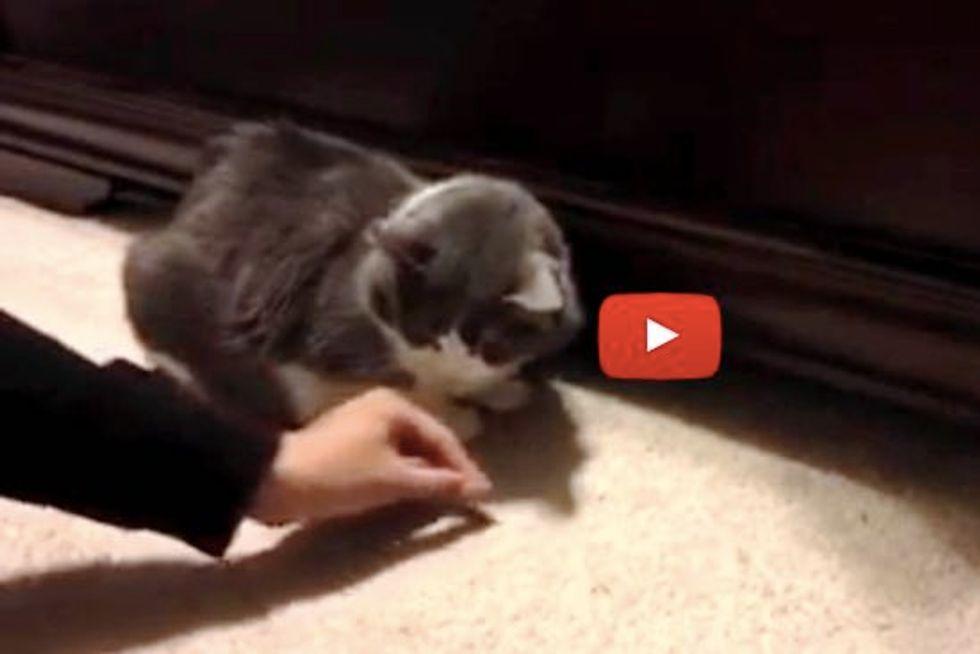 Kitty's Treats Get Taken Away by a Hidden Bandit
