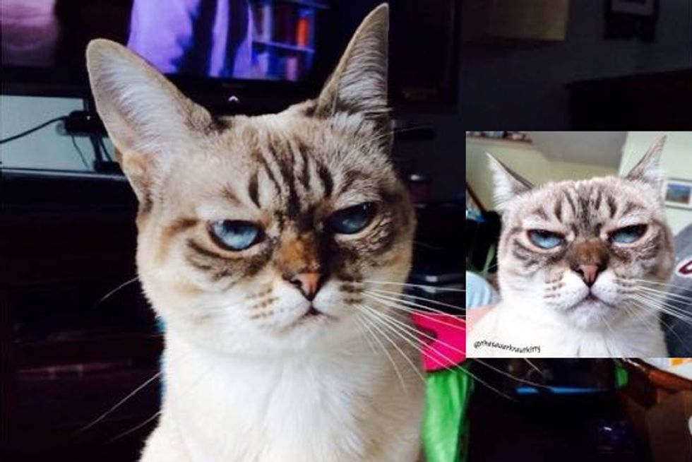 Meet Sauerkraut the Cat, the Grumpy Sourpuss