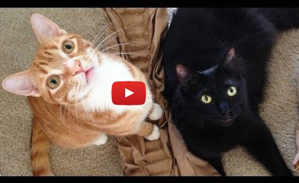 "How Cats Say ""I Love You"" by Cole and Marmalade"