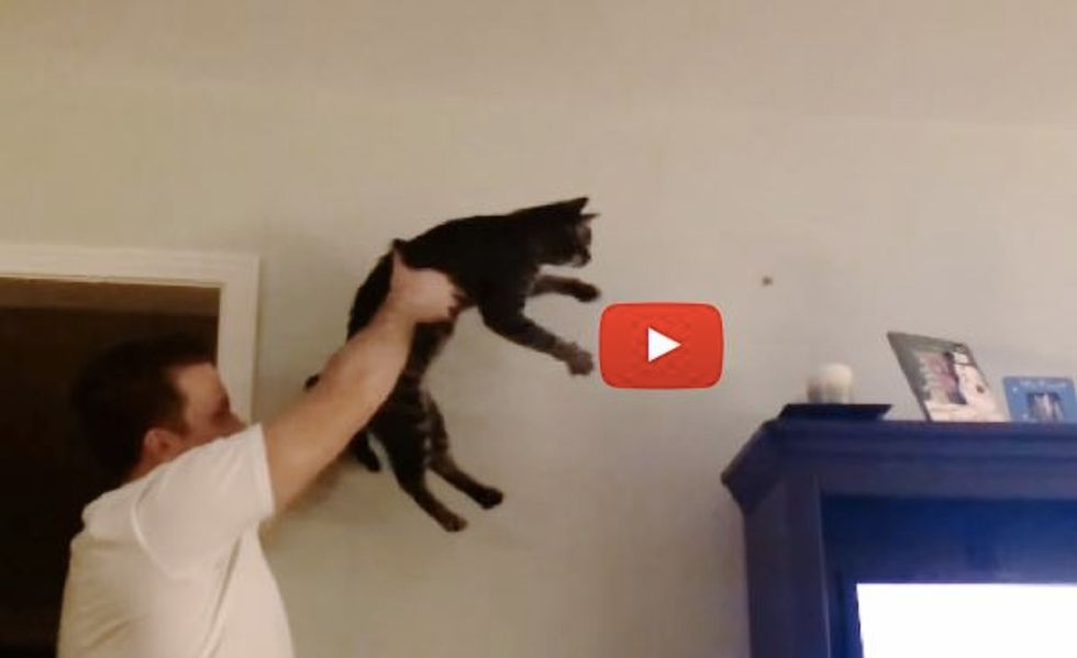 Cat and His Human Chasing a Bug Together