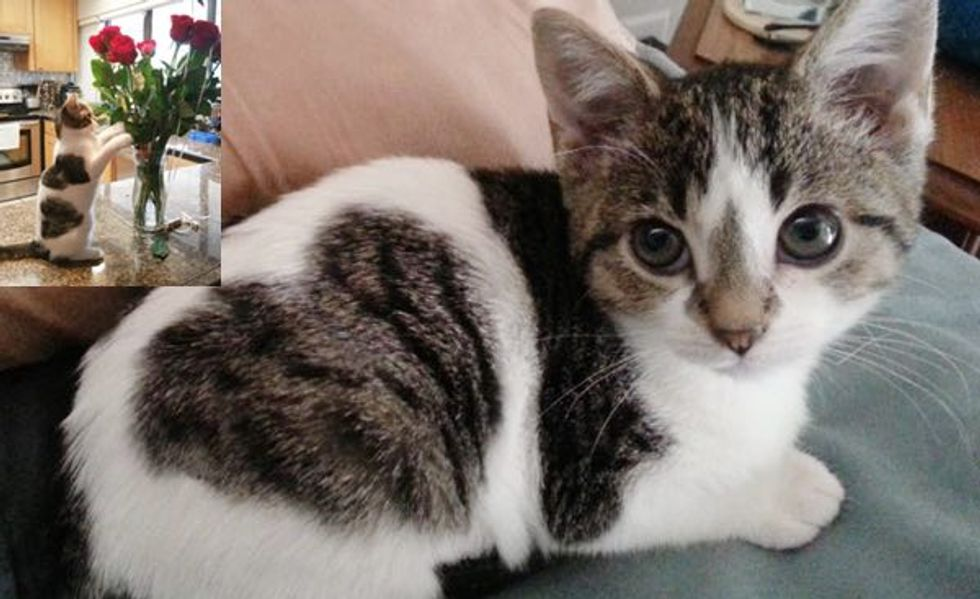 Frida a Former Foster Kitten, Stealer of Hearts