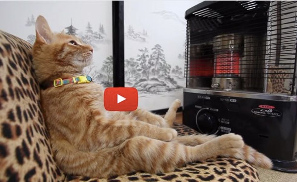 This Kitty Knows How to Live the Life, Coolest Thing to See All Day!