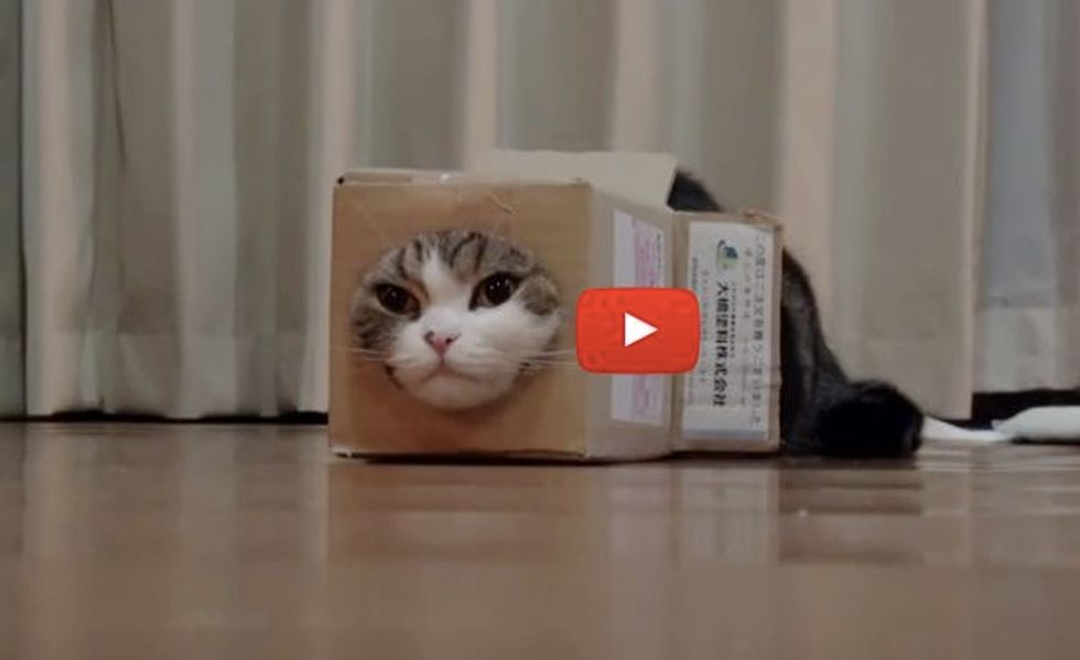 This Box is Half the Size of Maru, But He Still Makes It Work!