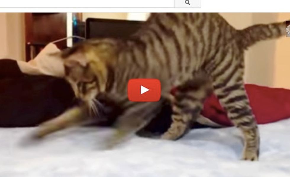 These Kitties Find Their Waterbeds Really Intriguing, Even Try to Catch the Jiggles