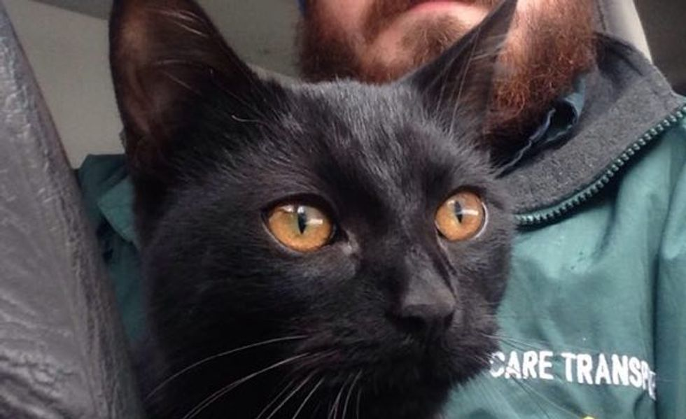Stray Cat Jumps into Man's Car to Stay Warm. He just Couldn't Leave the Cat