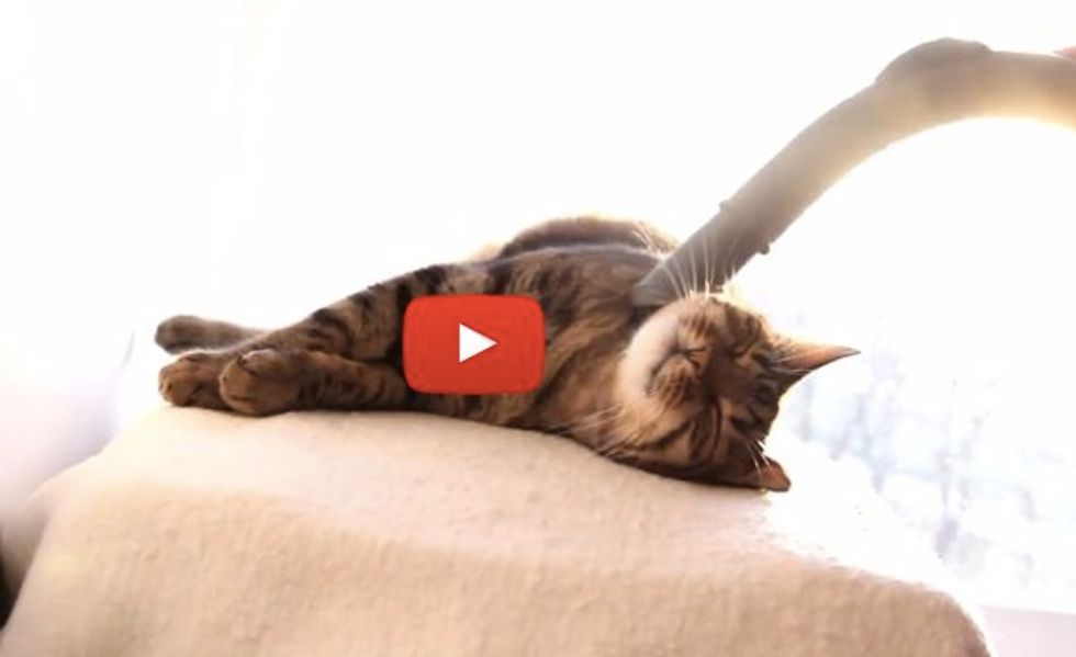 Cat Enjoys Spa Treatment with Vacuum Cleaner