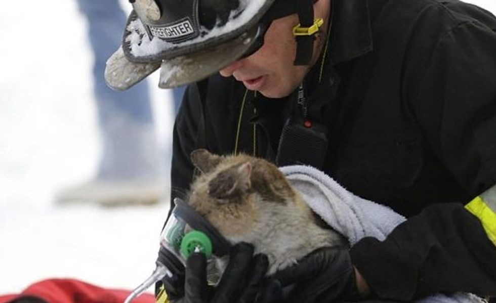 Prissy the Cat Who Escaped House Fire is Comforted by Firefighter