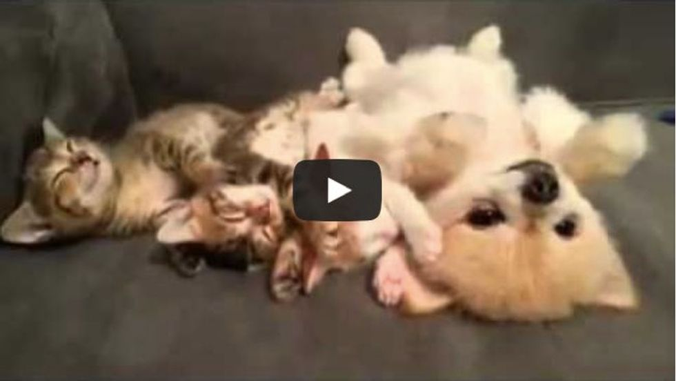 These 3 Kittens Napping with Their Dog Buddy. I Can't Handle the Cute!