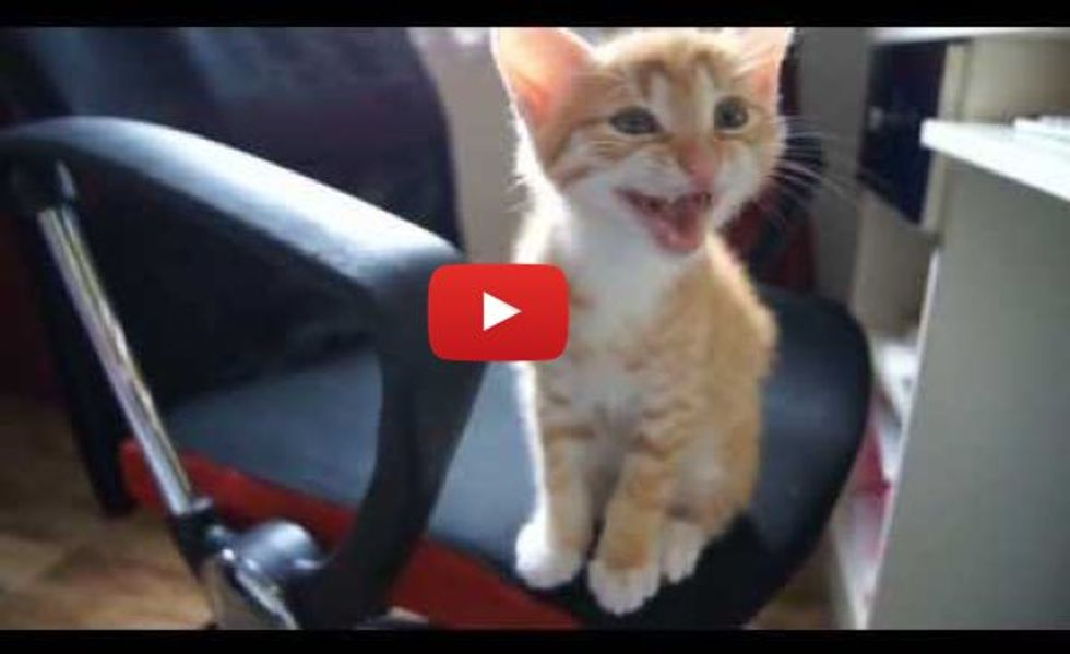 Various Kittens Meowing. This Will Melt Hearts!
