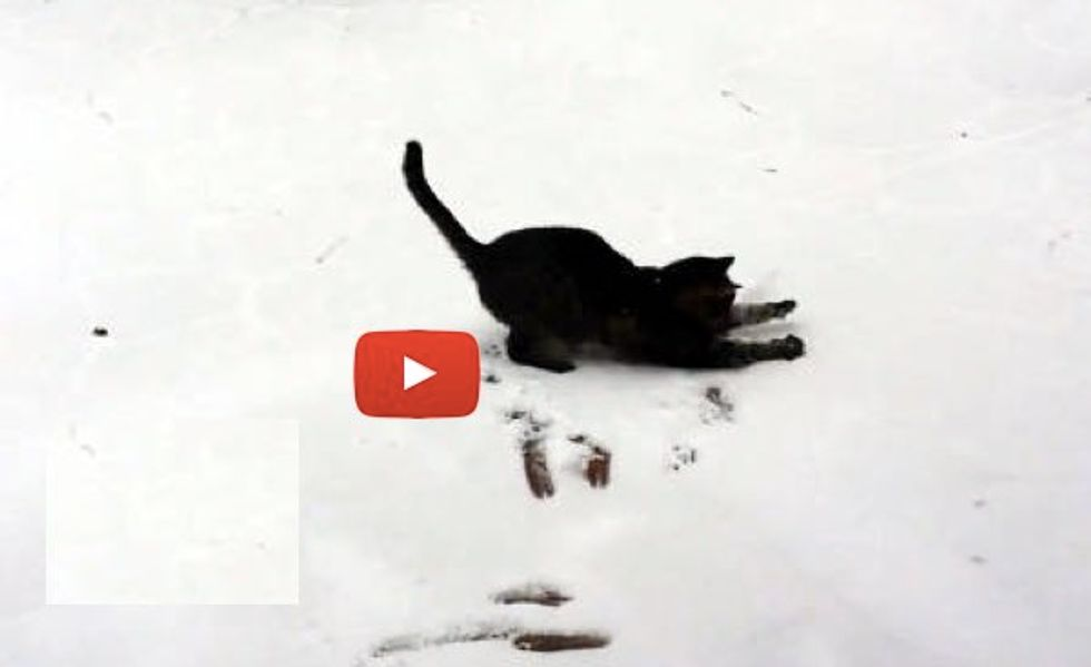 Cat Sees Snow for the First Time, Tries to Catch it!