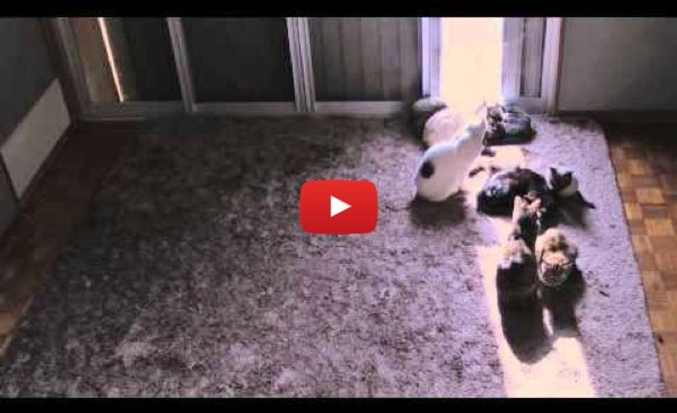 These Kitties Love Following the Sun - Time Lapse