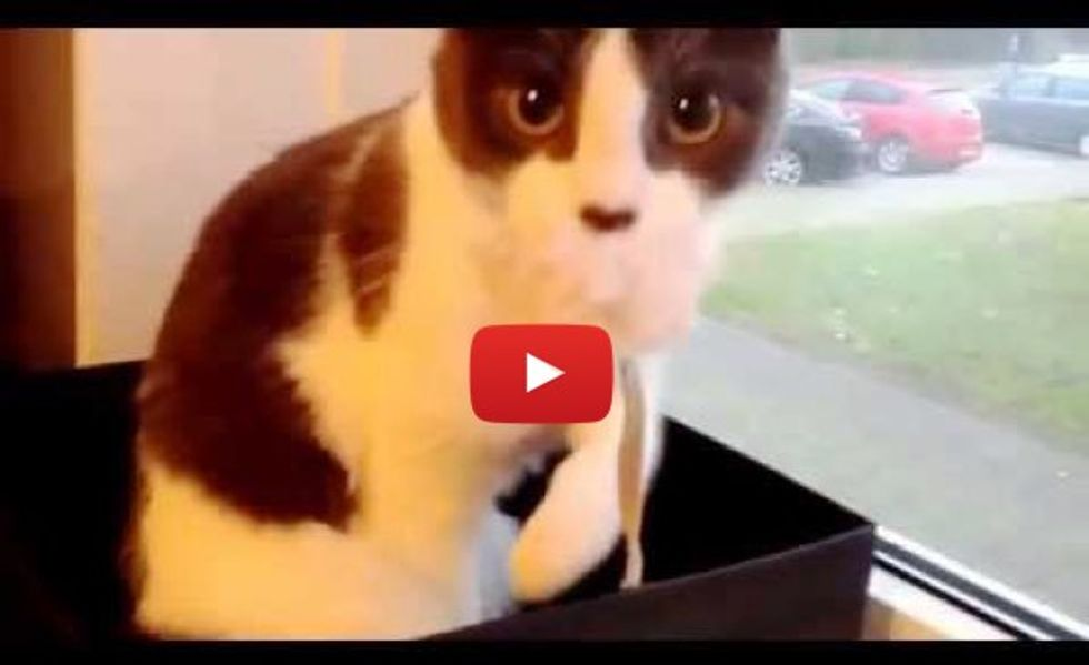 This Kitty Just Realizes She's Being Filmed. Her Reaction is Priceless!