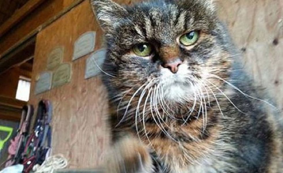 Swedish Woman Says Her Cat Missan Turns 30 This Year