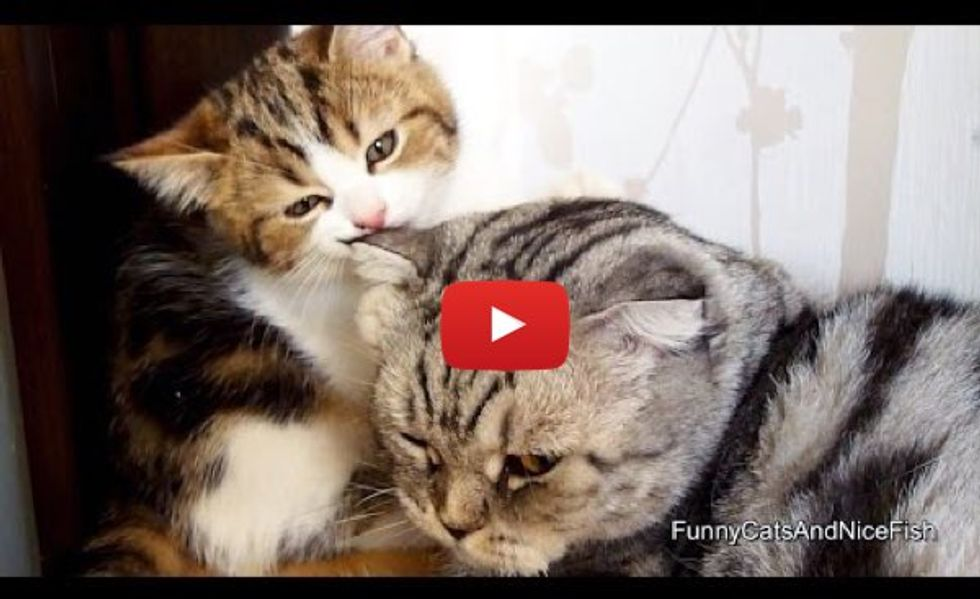 So Much Love! These Kitties Will Make You Smile!