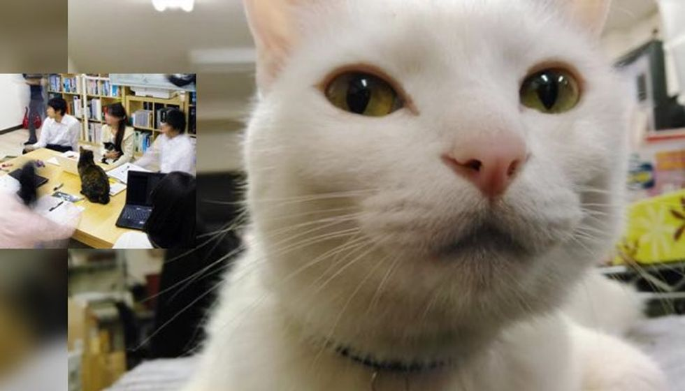 Company Adopts Rescue Cats to Help Employees Unwind and Improve Productivity