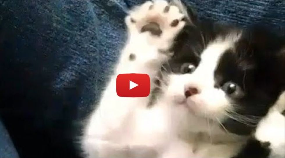 Kittens Learning Things for the First Time