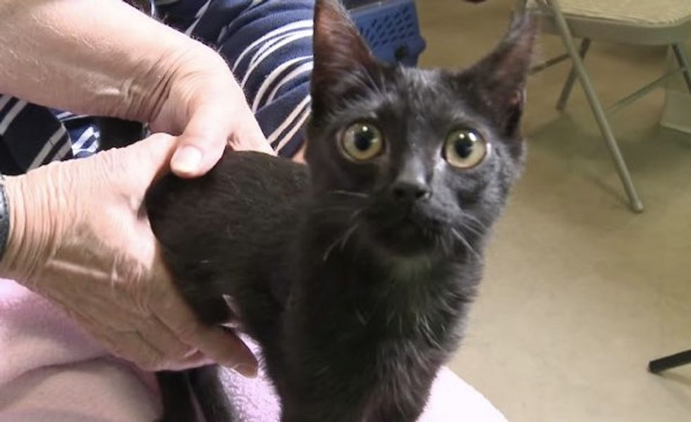 Special Needs Kitty Learns to Walk on Her Own Despite Her Limitations
