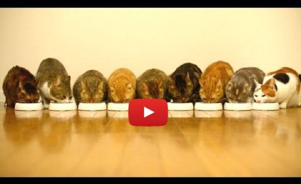 9 Cats Munch Away Cat Food