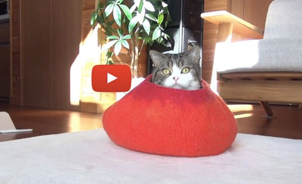 Maru Hiding in Bed, Watching Hana Act Silly and More