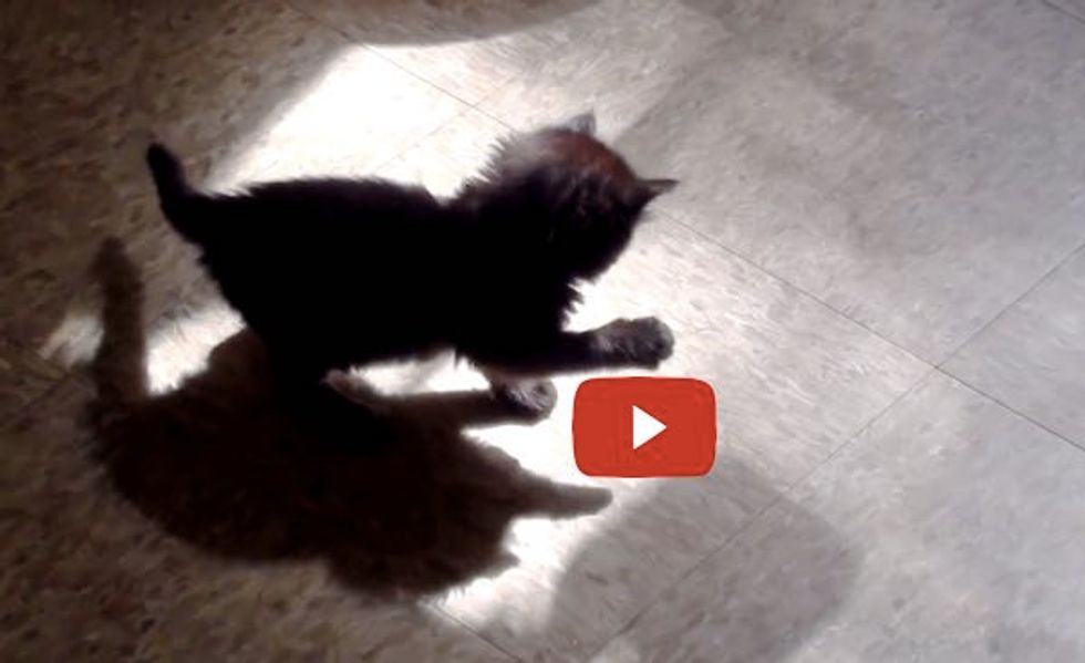 Kitten Discovers a Shadow Intruder and Tries to Catch It!