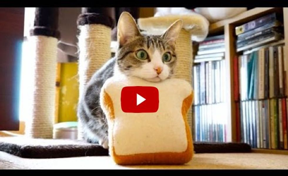 Bread Cat Launches Like a Missile
