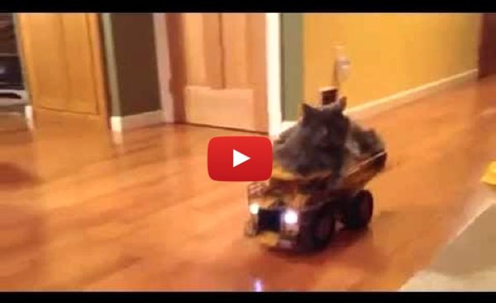 Cat Enjoys Riding His Truck to the Kitchen