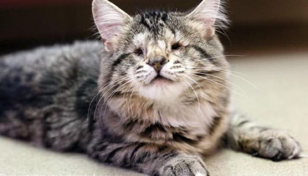 Cat with No Eyes Finds Hope and A New Home
