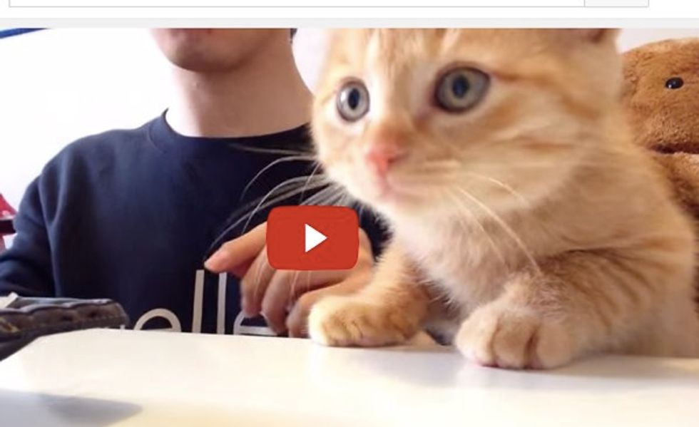 Kitty Demands To Know What His Human is Eating