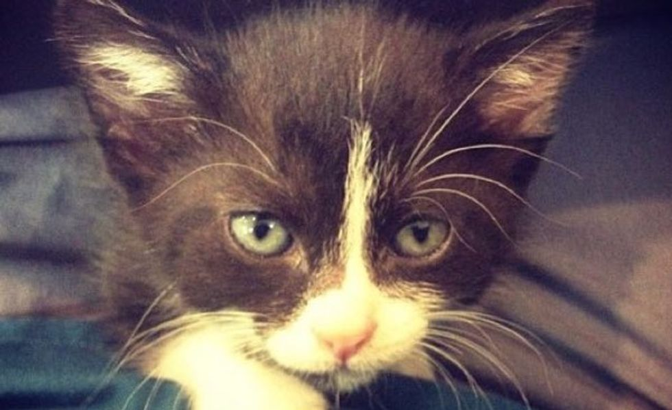Mavis, an Orphaned Kitten, Found a Surrogate Mom and a Second Chance at Life