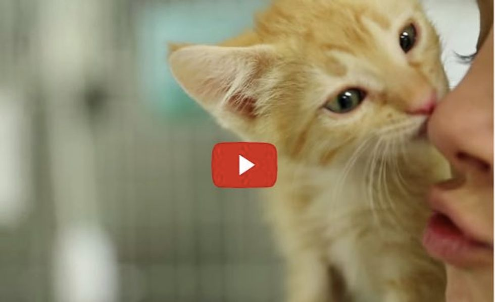 When You Hold a Shelter Kitten, Magic Happens...