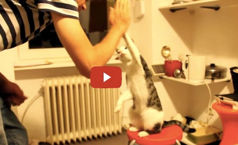 These Cats and Their Humans High Five Like Bros