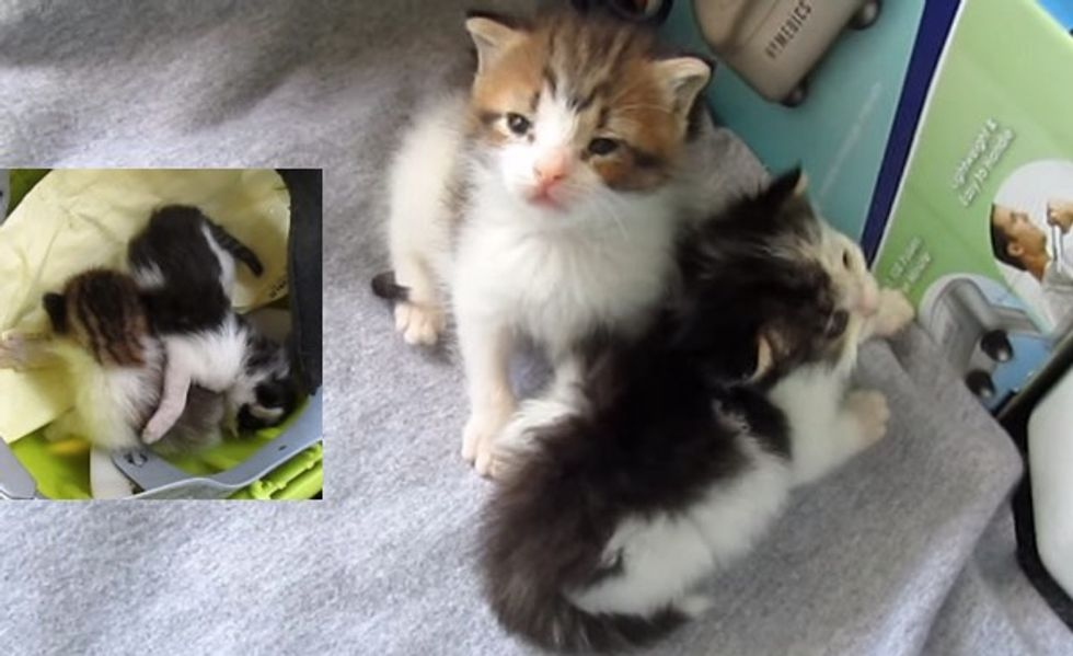 Two Kittens Rescued and Raised By a Garbage Man, Their Journey in Videos