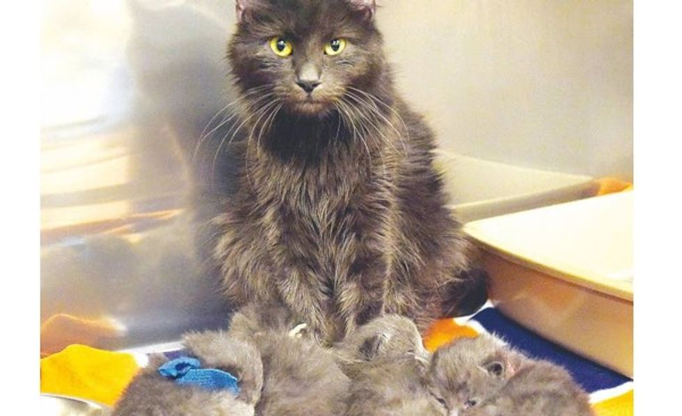 Cat Mama is Reunited with Her Kittens After a House Fire
