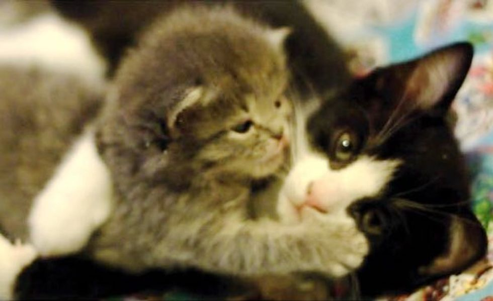 Rescue Cat Mama Adopts Orphan Kitten in Need of Motherly Love