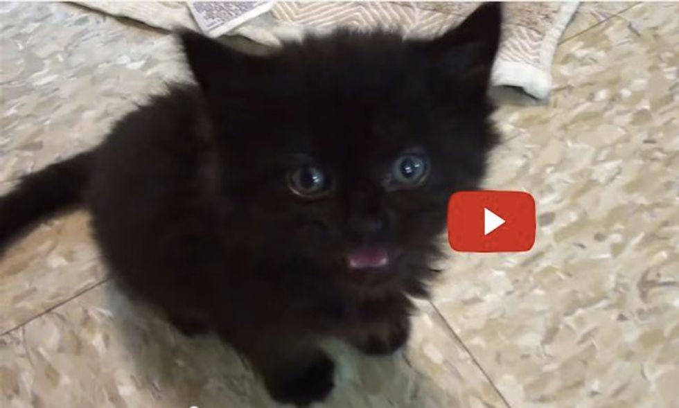 Black Cats Rule! This Little Buddy Will Tell You Why.