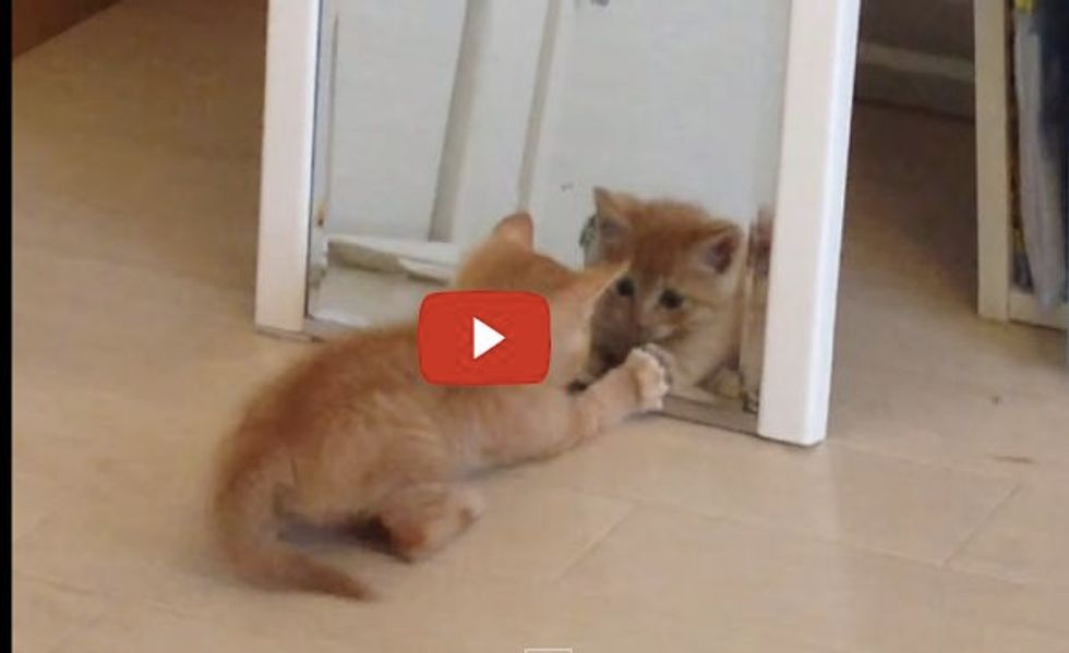 Tiny Kitten Discovers a Look-alike Kitty and Tries to Catch It