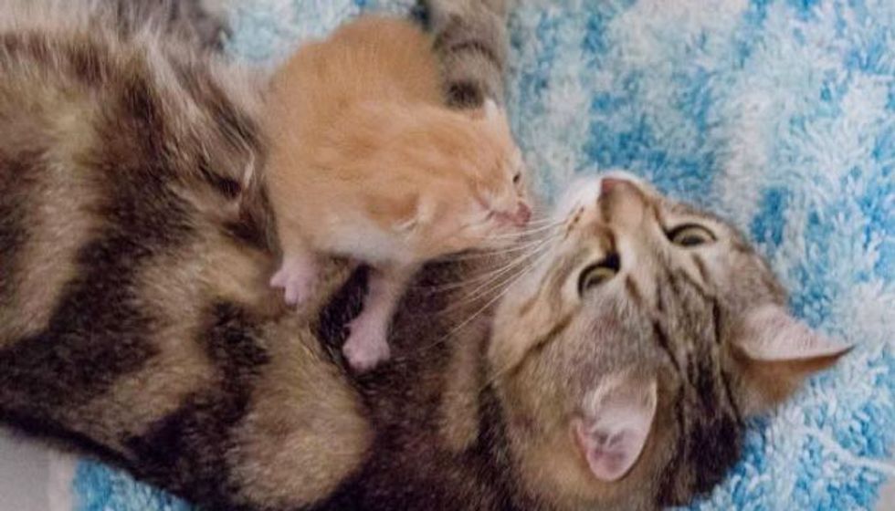 1 Week Old Orphan Kitten Finds a Surrogate Mom and a New Home